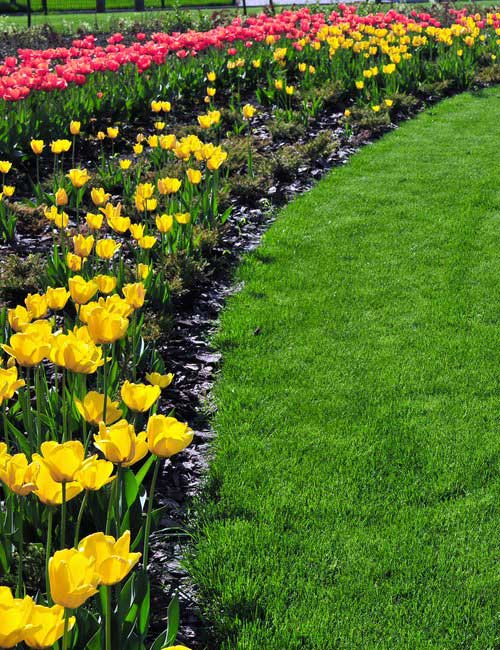 Landscaping with tulips created by Create-A-Scape in your Moorsetown New Jersey yard