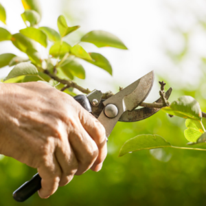 Pruning your trees and shrubs on your Cherry Hill, NJ property will boost your home's curb appeal.