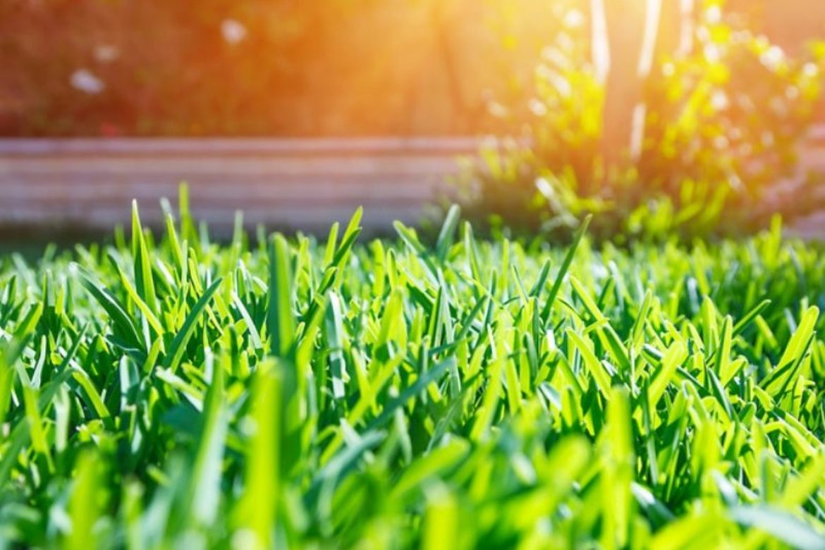 End Of Summer Lawn Care Tips
