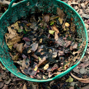 One environmentally friendly way to get rid of fall leaves in Haddonfield, NJ is to compost them.