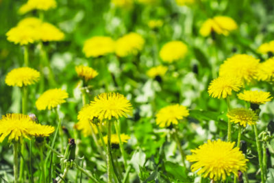 2020 Lawn Care Plan: Three Best Tips for a Healthy Lawn in 2020